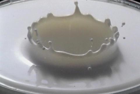 Milk drop Footage