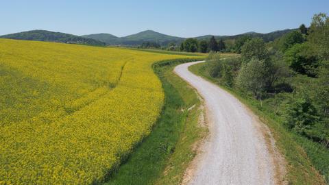 Aerial - Road next to the flowering oilseed rape field Footage