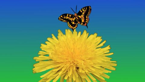 Footage of realistic flower of dandelion in grass and butterfly flying in the sky Animation