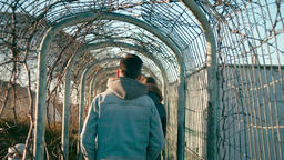 Young Adult Man is Walking in Park Tunel with old ivy. Man in Denim in Sunny Day Footage