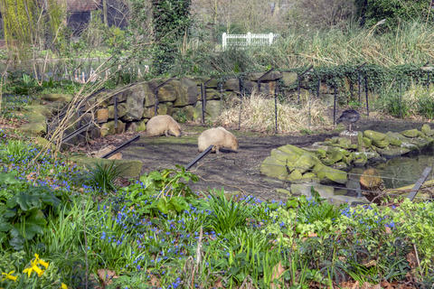 Two Capybara At The Artis Zoo Amsterdam The Netherlands 2018 フォト