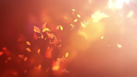 Autumn Leaf Background 04 Animation