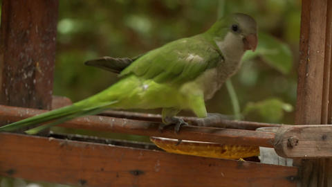 Periquito Bird Tropical Live Action