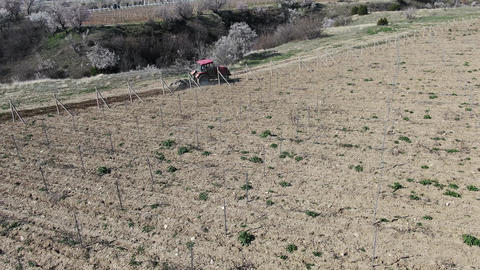 Red tractor cultivate soil in the vineyard Morning on a sunny day GIF