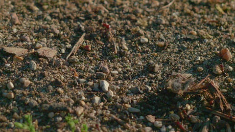 Ants entering and leaving the anthill GIF