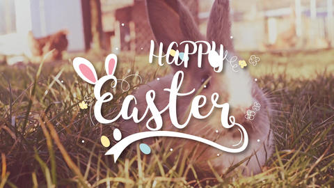 Easter white bunny with easter eggs sitting in the grass Stock Video Footage