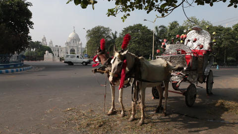Horse Cart riding on road Footage