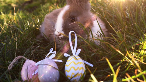 Easter white bunny with easter eggs sitting in the grass Live Action