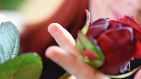 Valentine Gift. Young Girl smelling on a red rose Footage
