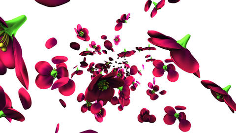 Purple flowers on white background CG動画素材
