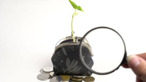 Money business finance bank concept, purse with growing plant, money tree growth Live Action