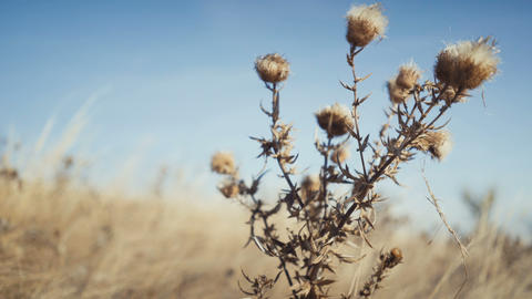 closeup dry grass nature background Footage