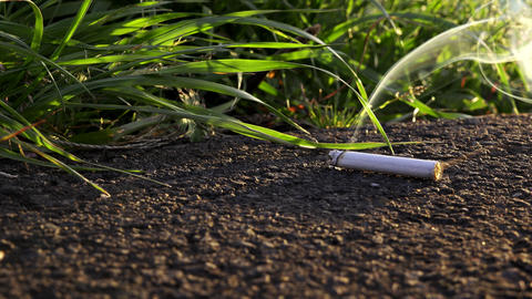 4K Tobacco on the road with grasses Archivo
