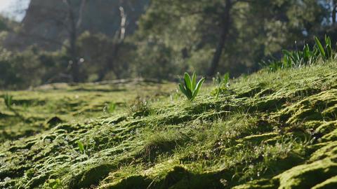 Closeup of green grass, Turkey nature Live Action