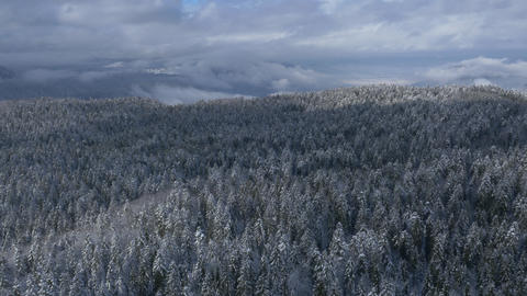 Aerial - Snow-covered forest with a misty sky Footage