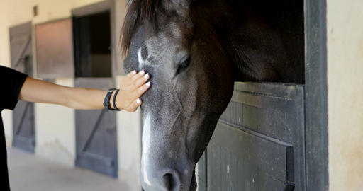 woman's hand caresses a horse Footage