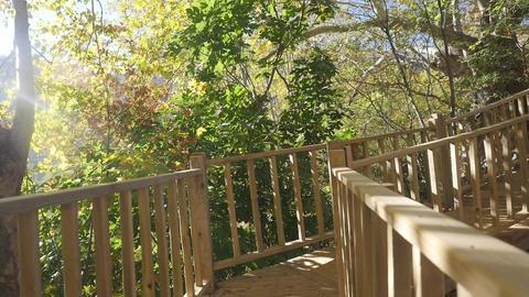 Boardwalk through an autunm forest in sunshine weather Footage