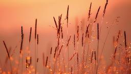 Field of grass in backlight sunlight Footage