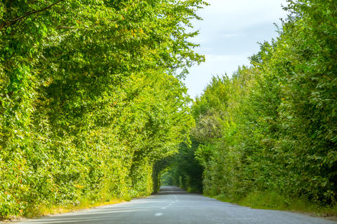 Empty Rural Road and Green Tree Tunnel Photo