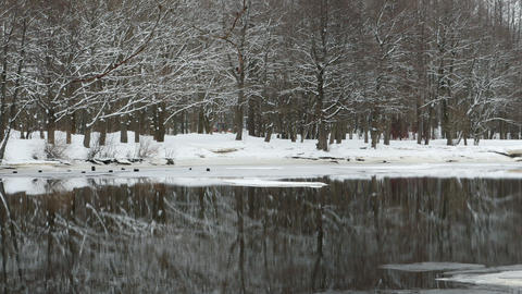 winter forest is reflected in the water Footage