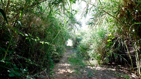 Walk through bushy path, glide shot, exotic plants around Footage