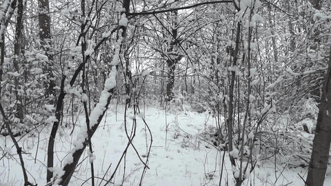 Traveler who goes through snowy forest searching for the best route 11 Footage