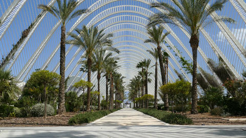 The City of Arts and Sciences, the Umbracle garden Footage