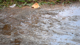 Rain falling on the road Footage