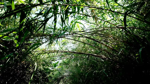 Walk through bushy path, glide shot, exotic plants around Footage