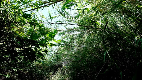 Walk through bushy path, glide shot, exotic plants around Stock Video Footage