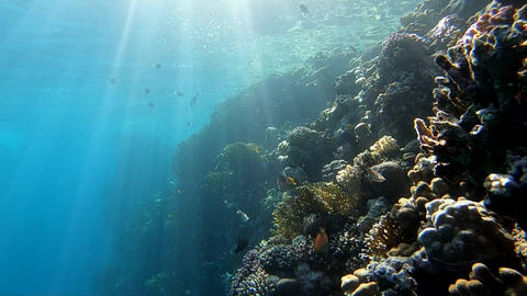 Sunlight penetrates the water and illuminates the coral reef with fish Footage
