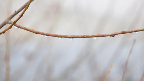 Water drops on a thin branch Footage