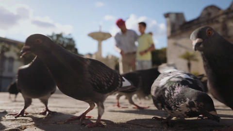 2-Grandfather And Grandchild Feeding Pigeons With Bread On Vacations Footage