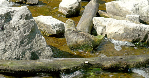 River Water Running Through Stones And Wood Footage