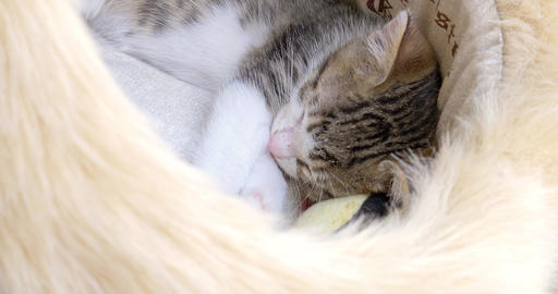 Portrait Of Cute Baby Cat Sleeping Footage
