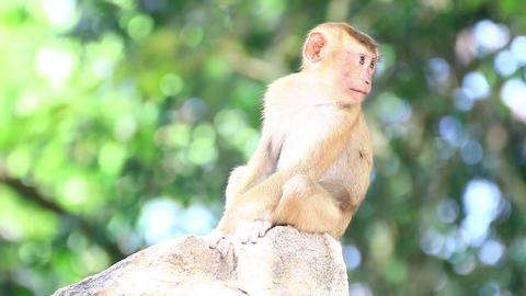 Young monkey sitting on the rock Live Action
