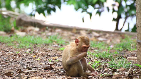 Young monkey sitting on the ground Live Action