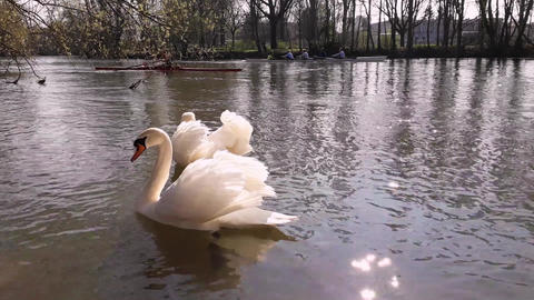 Swan river Footage