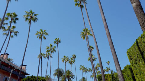 The Palm trees of Beverly Hills - travel photography Footage