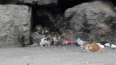 Hungry and tired alley cats in garbage Footage