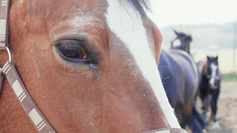 Close-up of brown horse eye with other horses in background ビデオ