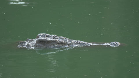 A top of crocodiles head over the green water Footage