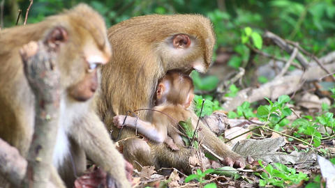 Baby monkey and mother sitting Live Action