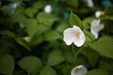Pretty white flowers Fotografía