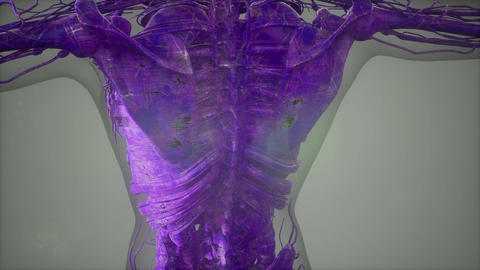 Complete close-up view of the Skeletal System with transparent body ビデオ