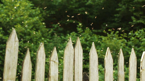 Hive bees behind fence ビデオ