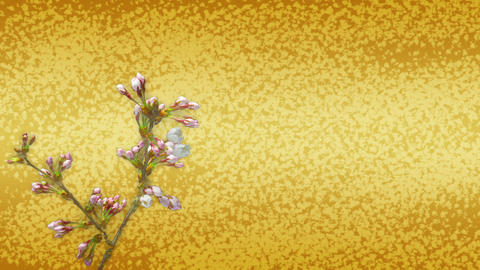 Japanese pattern background and cherry blossom Stock Video Footage