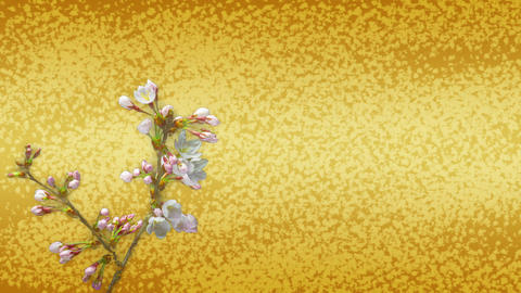 Japanese pattern background and cherry blossom Animation
