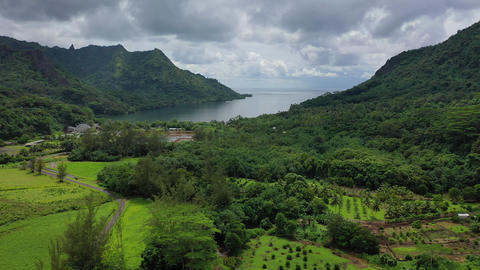 Drone view of Opunohu Bay on Moorea, French Polynesia, Tahiti Live Action