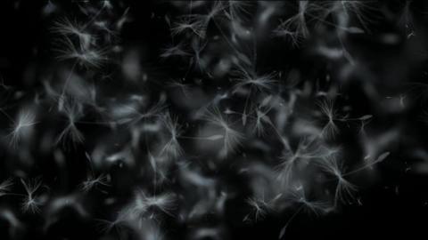 flying dandelion & catkins Stock Video Footage
